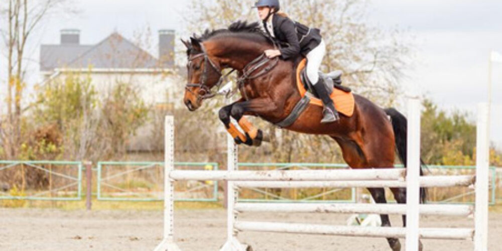 Understanding Insurance Policies for Your Horse
